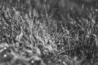 tylerfinck-bwgrass