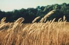 unsplash-grass